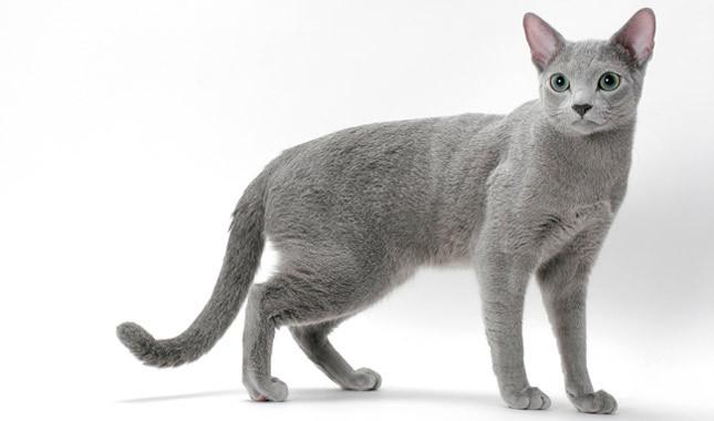 Что нужно знать, когда заводите в доме кошку?