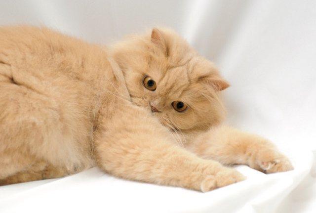 Причины выпадения шерсти у кошки.