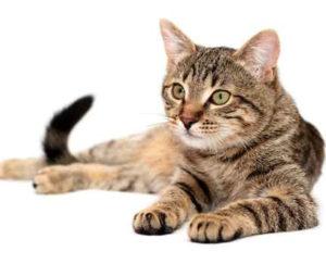 Интересное о кошках.