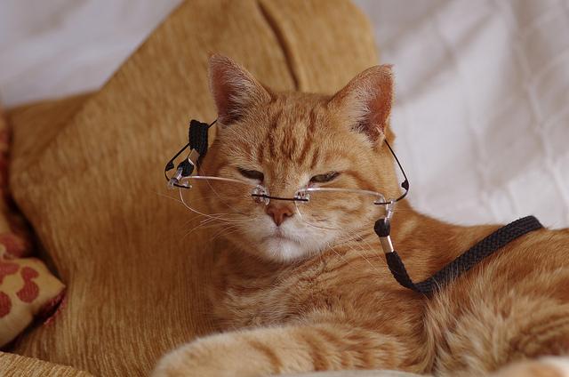 Как считать года у кошек?