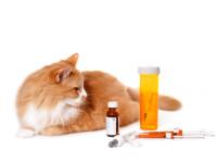 Кошки – лекарство для души и тела