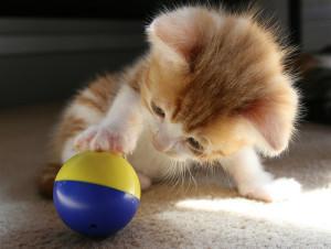 baby-ball-cat