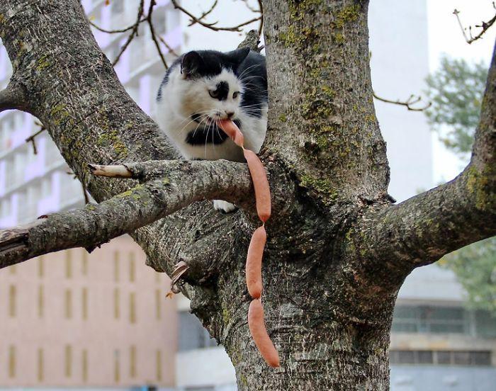 О котах – ворах. И их психологических особенностях