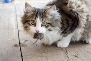 Как заставить кота ловить мышей