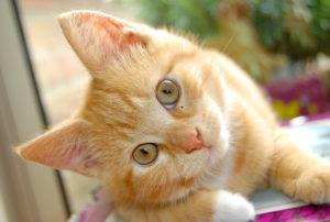 cats-names
