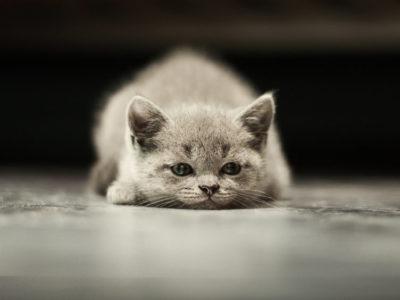 Чем кошка умнее человека?