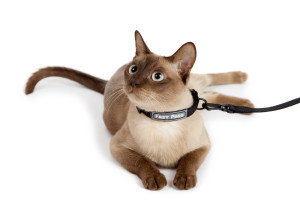 collar_for_cat