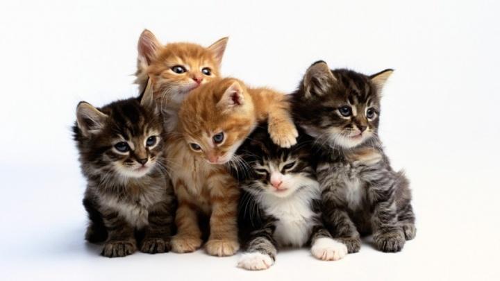 Как относиться к кошке