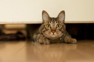 Уход за шерстью кошки