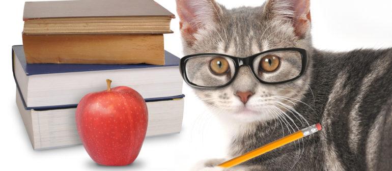 Обучение кошки, и команды.