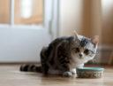 Как приучить кошку к новому корму?