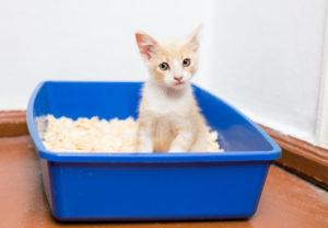 Несколько правил как приучить кошку к лотку
