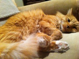 Обучение кошки, что нужно знать?