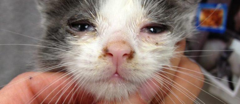 Болезни которые передаются от кошки к человеку