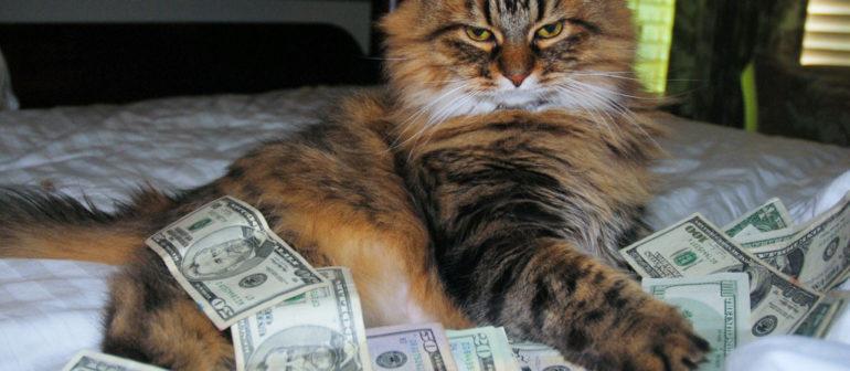 Кошка купить иль не купить?