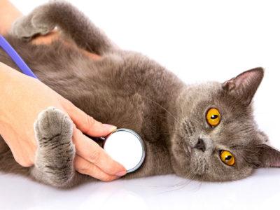 Почему кошка, когда чувствует смерть, уходит?