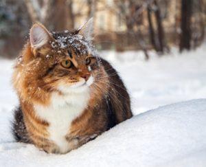 Происхождение слова «Кошка»
