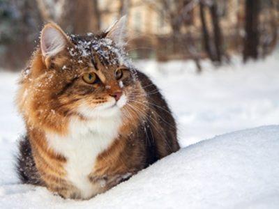 """Происхождение слова """"Кошка"""""""