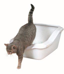 Тяжелый, но решаемый вопрос, как приучить котенка к лотку?