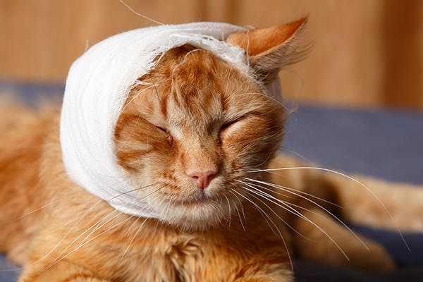Болят уши у кошки