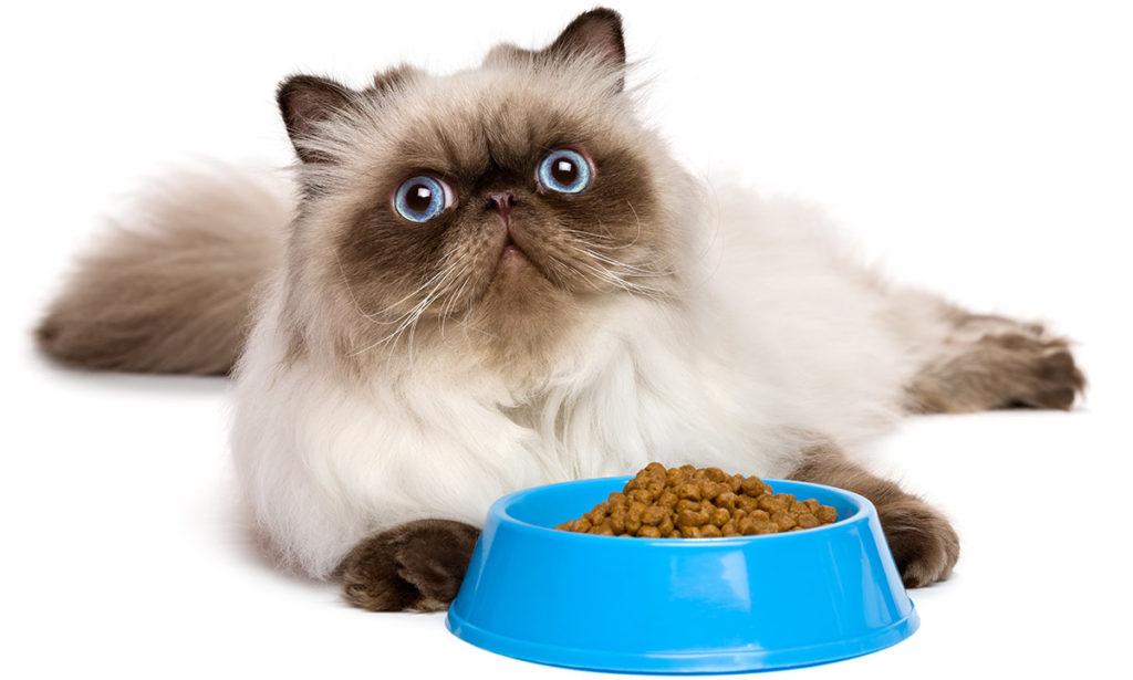 Каким кормом лучше кормить кошку?
