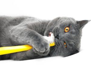 Как чистить зубы кошке?