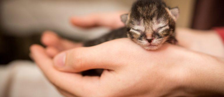 Как ухаживать за новорожденными котятами?
