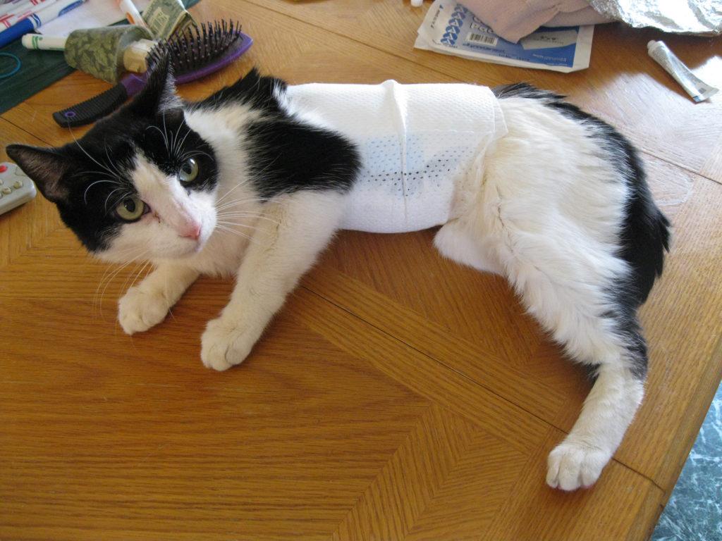 Последствия стерилизации кошек