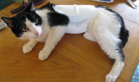 Симптомы аллергии на кошек