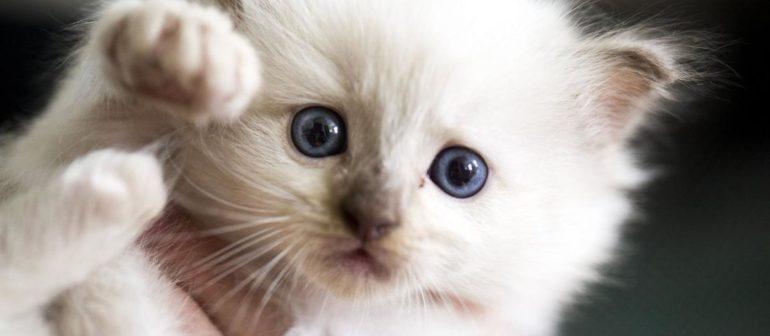 Клички кошек мальчиков