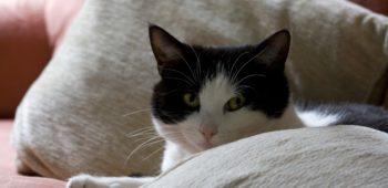 Почему кошка гадит на кровать?