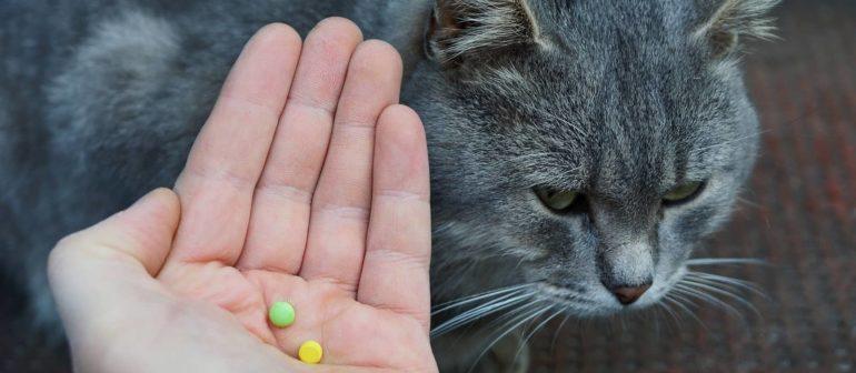 Как правильно дать кошке таблетку?