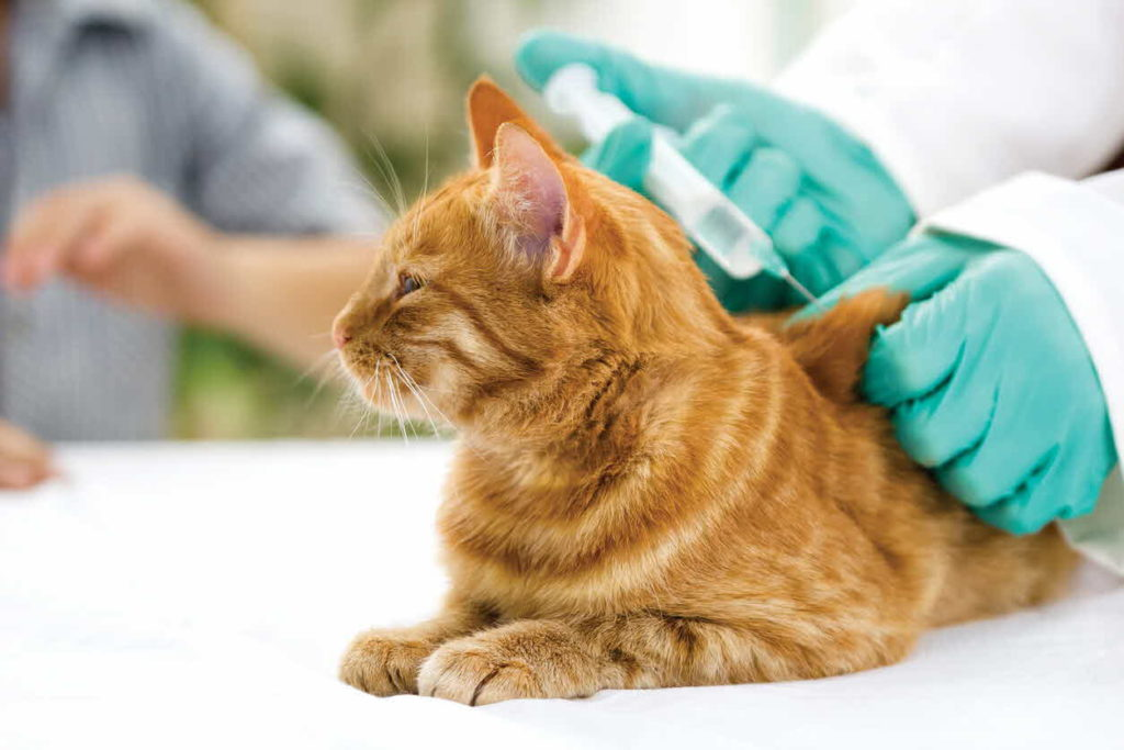 Какие нужны прививки кошке?
