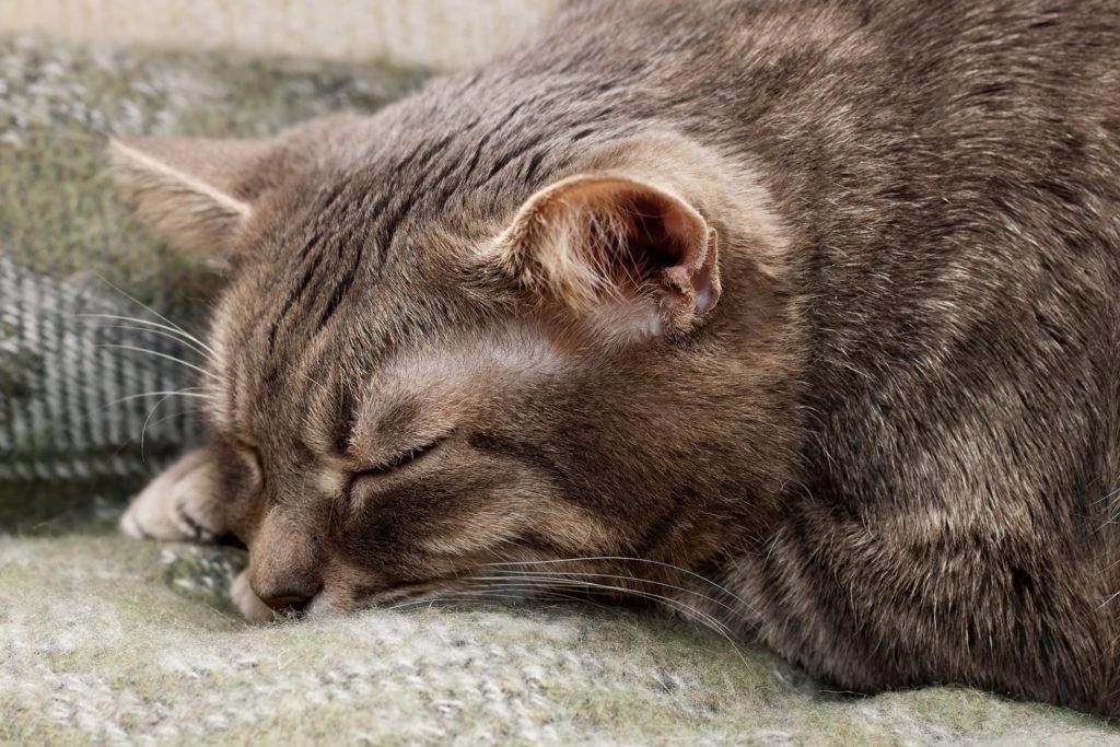 Поведение кошки перед родами