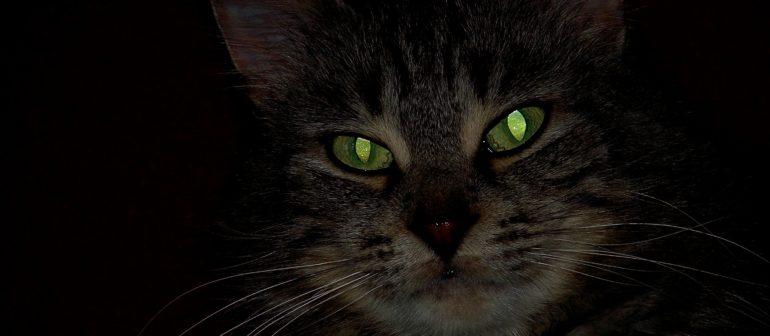 Почему у кошки светятся глаза?