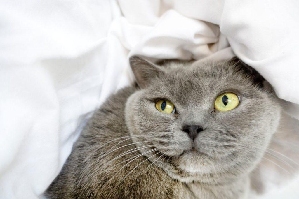Как можно назвать кошку?