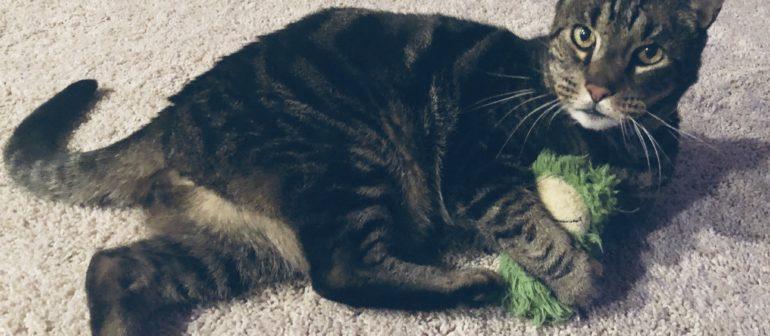 Симптомы и лечение бешенства у кошек