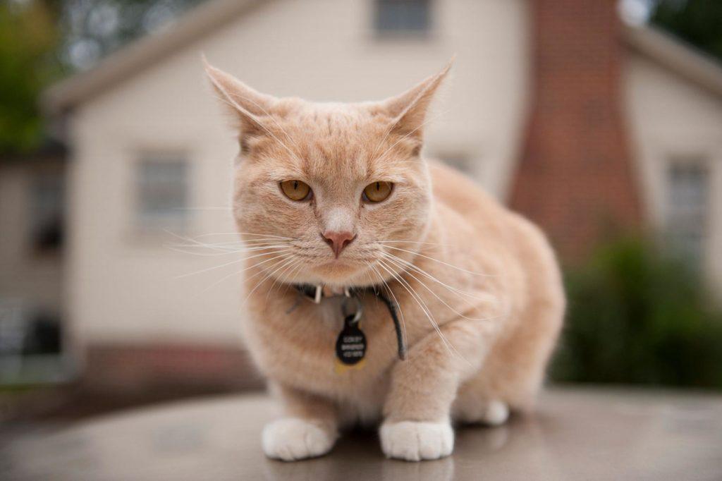 Симптомы и лечение мастита у кошек