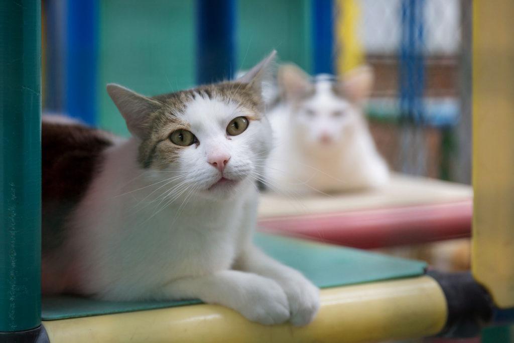 Симптомы и лечение микроспории у кошек