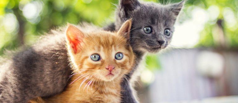 Симптомы и лечение мочекаменной болезни у кошек