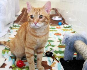 Симптомы и лечение запора у кошек