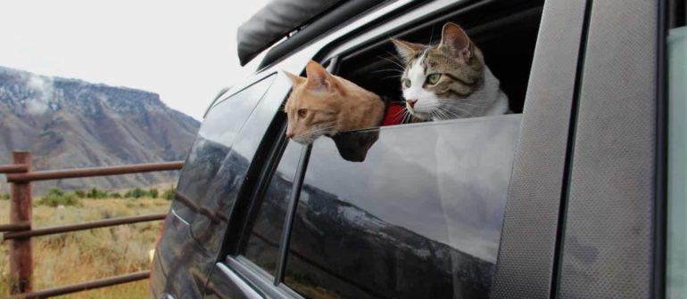 Как сделать документы на кошку?