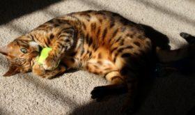 Сколько живут кошки?