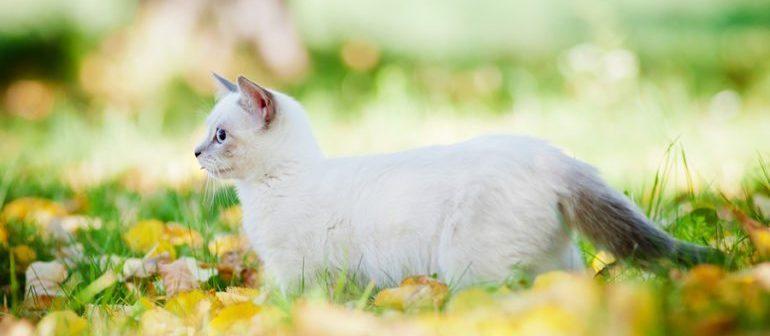 Средняя продолжительность жизни кошек
