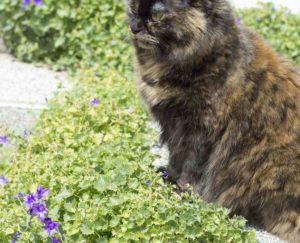 Как отучить кошку от вискаса?