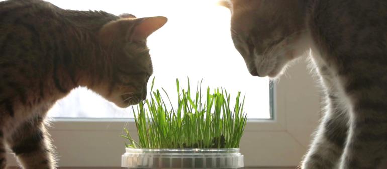 Какие витамины давать кошке?