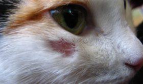 Домашние животные – наши друзья